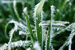 καλυμμένη λεπίδες χλόη παγετού Στοκ Φωτογραφία