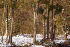 Καλυμμένη με το δάσος χιονιού - Γαλλία στοκ φωτογραφία με δικαίωμα ελεύθερης χρήσης
