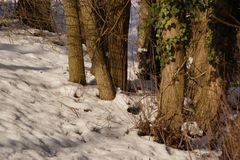 Καλυμμένη με το δάσος χιονιού - Γαλλία στοκ φωτογραφίες με δικαίωμα ελεύθερης χρήσης
