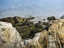 Καλυμμένη φύκι ακτή Στοκ Φωτογραφία