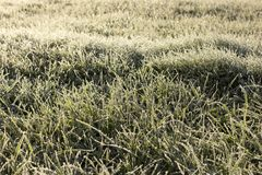 καλυμμένη χλόη παγετού Στοκ φωτογραφία με δικαίωμα ελεύθερης χρήσης