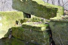 καλυμμένοι βράχοι βρύου Στοκ Εικόνα
