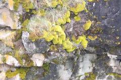 Καλυμμένοι βρύο βράχοι στους τοίχους φαραγγιών ποταμών Στοκ φωτογραφία με δικαίωμα ελεύθερης χρήσης