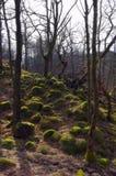καλυμμένοι δασικοί βράχ&omicron Στοκ Εικόνες