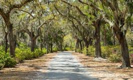 Καλυμμένος αγροτικός δρόμος στον αμερικανικό νότο στοκ φωτογραφία