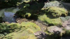 Καλυμμένος βρύο βράχος στον κήπο επίδειξης φιλμ μικρού μήκους