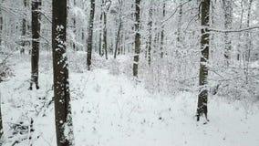 καλυμμένος δασικός χειμώνας χιονιού απόθεμα βίντεο