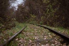 Καλυμμένος με χορτάρι σιδηρόδρομος στο δάσος στοκ εικόνα