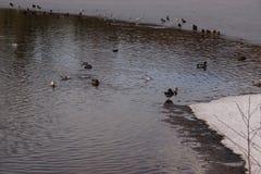Καλυμμένος στη λίμνη και το χιόνι παγετού - Γαλλία στοκ εικόνες