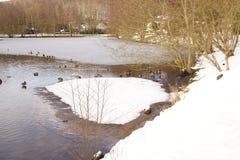 Καλυμμένος στη λίμνη και το χιόνι παγετού - πάπιες και πουλιά σε ένα παγωμένο νερό - Γαλλία στοκ φωτογραφίες με δικαίωμα ελεύθερης χρήσης