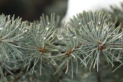Καλυμμένος, χιονώδης, ξύλινος, κομψός, πτώσεις, μακροεντολή, πράσινος, ακανθωτή, βελόνα, αειθαλής, μπλε, έλατο, κωνοφόρο, πάγος,  Στοκ Εικόνα