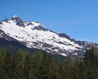 Καλυμμένος χιόνι πύργος βουνών πέρα από τα δέντρα πεύκων Στοκ Φωτογραφίες