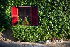 καλυμμένος ive τοίχος Στοκ Εικόνες