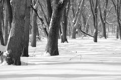 καλυμμένο ίχνος χιονιού Στοκ Εικόνα