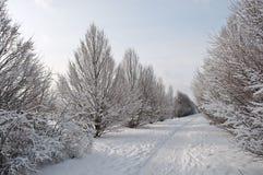 καλυμμένο αλέα χιόνι Στοκ Φωτογραφία