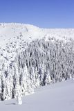 καλυμμένο δασικό χιόνι πεύκων Στοκ Εικόνες