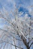 καλυμμένο δέντρο παγετού Στοκ Εικόνες