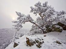 καλυμμένο δέντρο χιονιού βράχου Στοκ Εικόνες