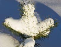 καλυμμένο δέντρο χιονιού πεύκων Στοκ Εικόνα