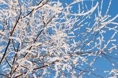 καλυμμένο δέντρο χιονιού Στοκ Εικόνες