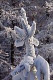 καλυμμένο δέντρο χιονιού &pi Στοκ Εικόνα