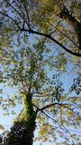 καλυμμένο δέντρο στοκ εικόνες