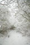 καλυμμένο δασικό χιόνι μονοπατιών Στοκ εικόνες με δικαίωμα ελεύθερης χρήσης