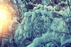 καλυμμένο δασικό χιόνι Στοκ Φωτογραφίες