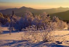 καλυμμένο θάμνος χιόνι κλίσεων Στοκ Φωτογραφίες