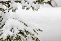 καλυμμένο κλάδοι χιόνι έλατου Στοκ φωτογραφίες με δικαίωμα ελεύθερης χρήσης
