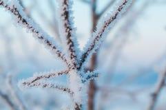 καλυμμένο κλάδος δέντρο π στοκ φωτογραφία με δικαίωμα ελεύθερης χρήσης