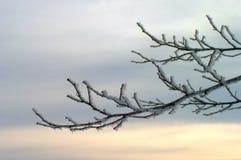 καλυμμένο κλάδος χιόνι Στοκ φωτογραφίες με δικαίωμα ελεύθερης χρήσης