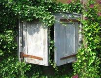 καλυμμένο παράθυρο κισσώ Στοκ Φωτογραφίες