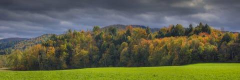 καλυμμένο φθινόπωρο δέντρ&omic στοκ φωτογραφία με δικαίωμα ελεύθερης χρήσης