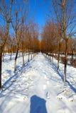 καλυμμένο χιόνι μονοπατιών Στοκ φωτογραφίες με δικαίωμα ελεύθερης χρήσης