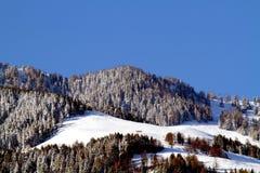 καλυμμένο δασικό χιόνι πεύ&ka Στοκ εικόνα με δικαίωμα ελεύθερης χρήσης