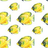 καλυμμένο butterflyfish σχέδιο Στοκ Εικόνα