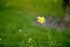 Καλό κίτρινο λουλούδι και πράσινη χλόη στοκ φωτογραφία με δικαίωμα ελεύθερης χρήσης