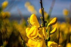Καλό κίτρινο λουλούδι με το μουτζουρωμένο υπόβαθρο στοκ φωτογραφία με δικαίωμα ελεύθερης χρήσης