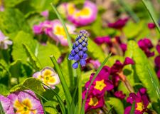 Καλό πορφυρό λουλούδι στην ηλιοφάνεια στοκ φωτογραφίες με δικαίωμα ελεύθερης χρήσης
