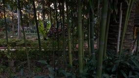 Καλό πράσινο backroud στοκ φωτογραφίες με δικαίωμα ελεύθερης χρήσης