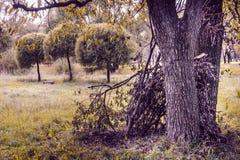 Καλύβα στο πάρκο στοκ φωτογραφία με δικαίωμα ελεύθερης χρήσης