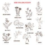 Καλύτερα χορτάρια για την αποκατάσταση εθισμού οινοπνεύματος ελεύθερη απεικόνιση δικαιώματος