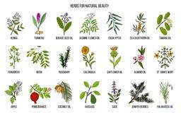 Καλύτερα χορτάρια για τη φυσική ομορφιά ελεύθερη απεικόνιση δικαιώματος