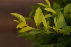 Καλύτερες στιγμές PIC λουλουδιών φύσης στοκ φωτογραφίες με δικαίωμα ελεύθερης χρήσης