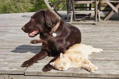 καλύτεροι φίλοι στοκ εικόνες