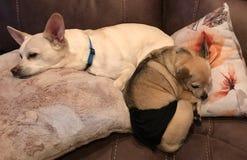 Καλύτεροι φιλαράκοι κοιμισμένοι στοκ εικόνες