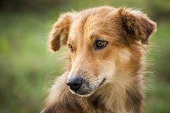 Καλύτερο φίλος-σκυλί 2 στοκ εικόνες