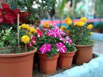 Καλύτερο flowerpot πρωτοτύπων στοκ φωτογραφία με δικαίωμα ελεύθερης χρήσης