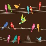 καλώδια πουλιών Στοκ Εικόνες